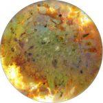Puder_Iris_Orange-300x300